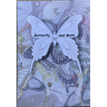 Butterfly and Moth - Ulrike Lohr